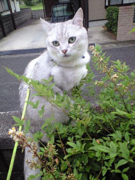 雨でもへっちゃらのアニー 7・3・2009.jpg