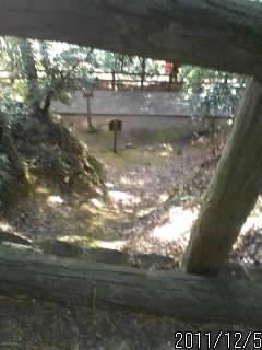 桜の馬場の上