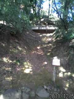 桜の馬場辺りの下