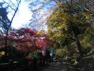 参道の紅葉3