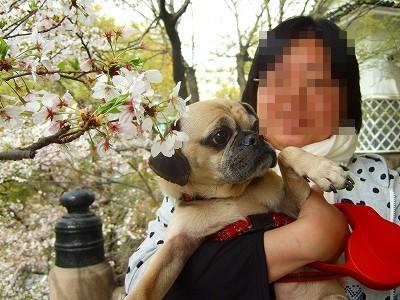 2008_0409kukku0196.jpg