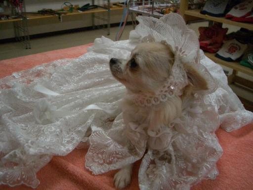 花嫁ライヤ