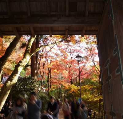 瑞宝寺公園 山門の紅葉