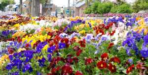 イングランドの丘★花