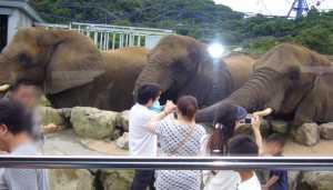 サファリワールド 象のえさやり