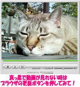 レオ君ムービー.jpg
