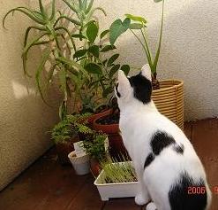 植物を見ています。.JPG