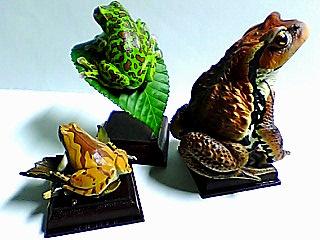 日本のカエル 二