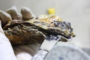 殻つき牡蠣開け方2