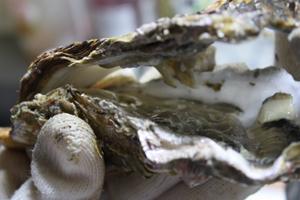 殻つき牡蠣開け方4