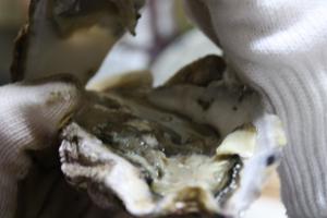 殻つき牡蠣開け方5