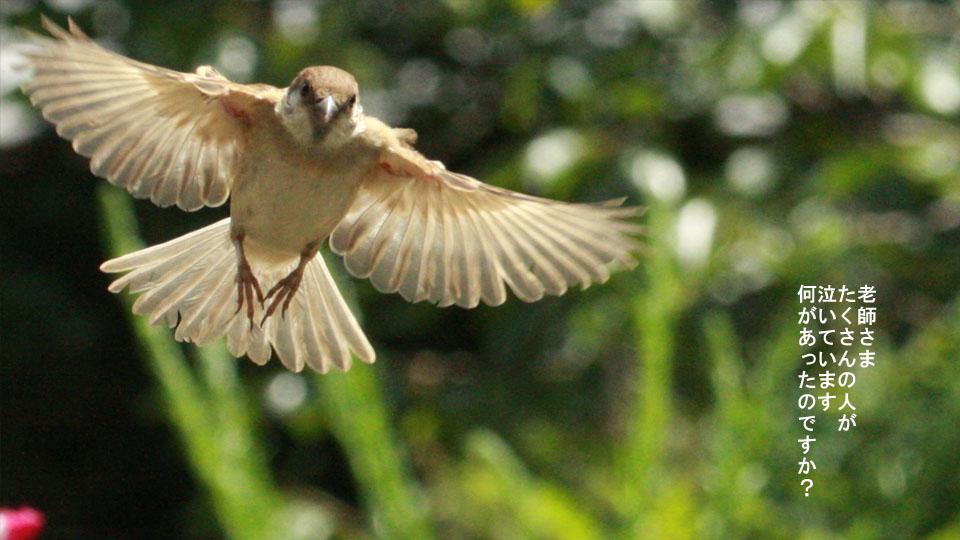 r-jack-sparrow-121-for-japan-2.jpg