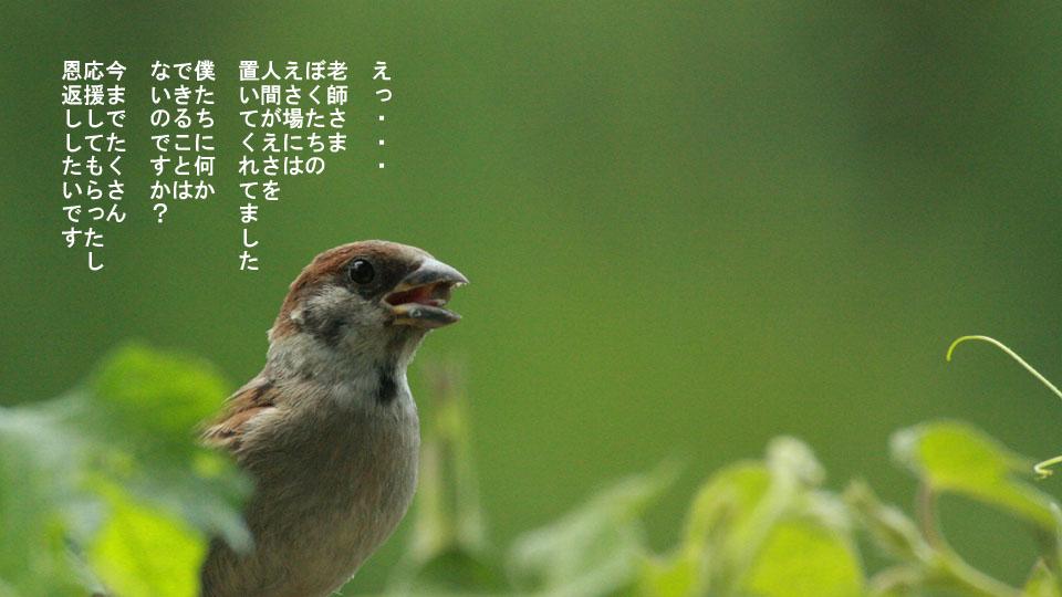 r-jack-sparrow-121-for-japan-4.jpg