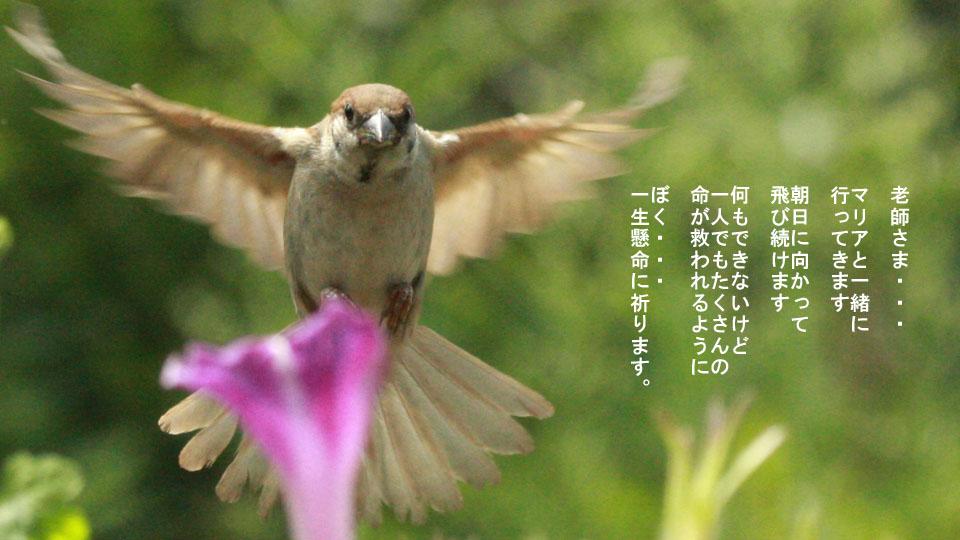 r-jack-sparrow-121-for-japan-6.jpg
