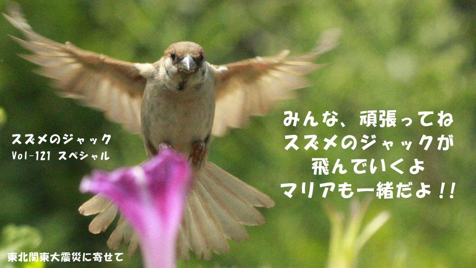 r-jack-sparrow-121-for-japan-8.jpg