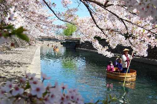 「大垣 桜 たらい」の画像検索結果