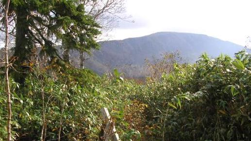 休憩所から山頂を.JPG