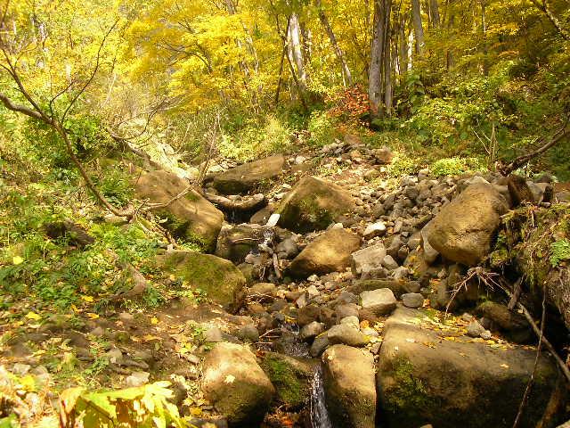 黄金色の登山道.JPG