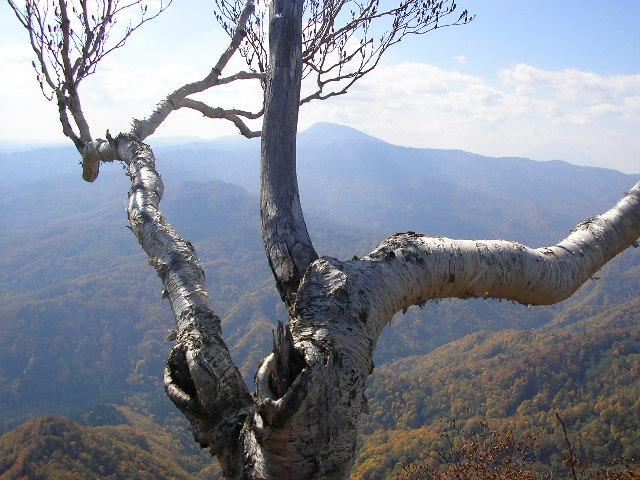 登ったばかりの無為根山.JPG