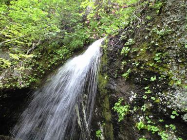 穴滝とヤシオツツジ.JPG