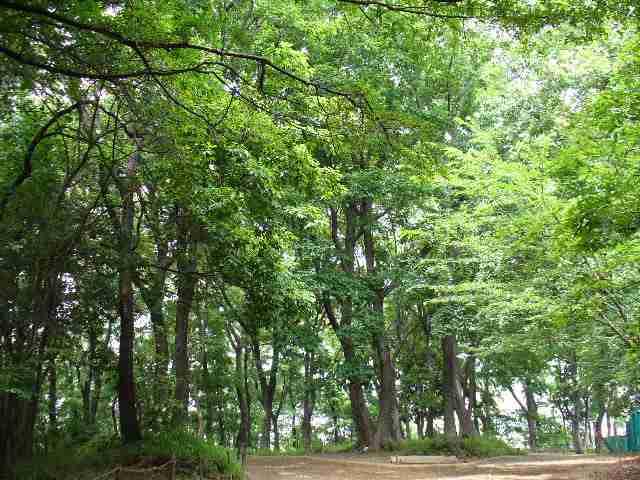 2005/6/1 昼の散歩道「森林浴」ちょと・・・