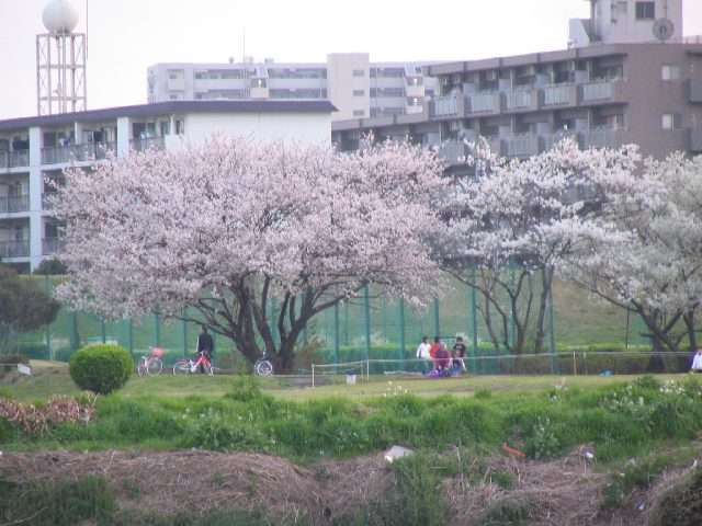 2005/4/9 土 暖かさに誘われ、たくさんの人出