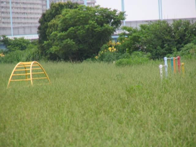2005/7/24 草に埋もれて