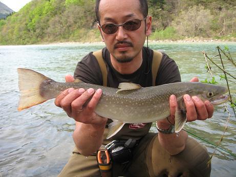 52センチ天然大岩魚