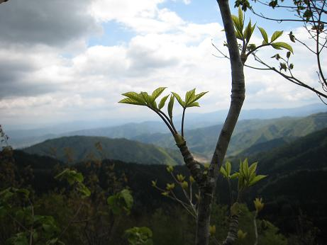 h19.5.19 山頂から見る眺め
