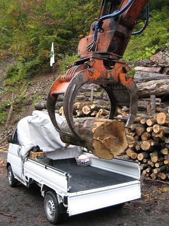 朴の木 積み込み