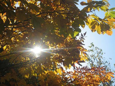 太陽と紅葉 h19