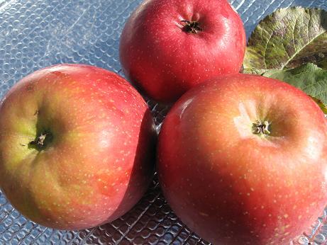 リンゴの蜜の見分け方