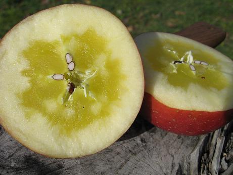 リンゴ 蜜入り