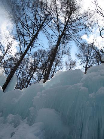氷点下の森 1