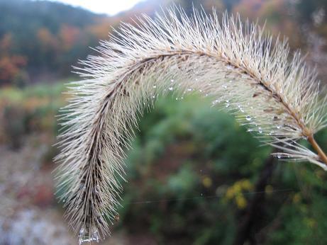 草 紅葉 1.JPG