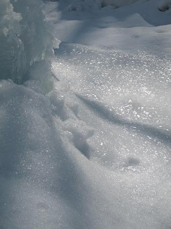氷点下の森  3