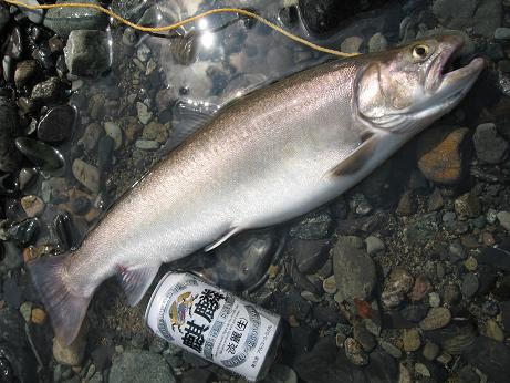 大岩魚 53cm メス
