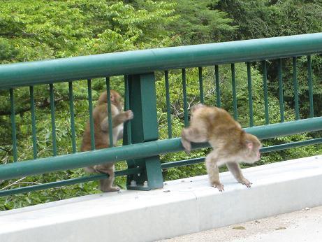 猿 高根 h19