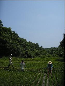 田んぼ4.JPG