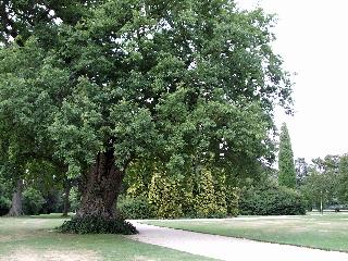 Blenheim Palaceの庭園