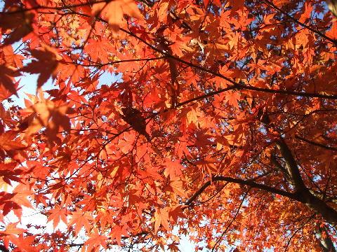 20081123 水戸偕楽園 所々に紅葉が