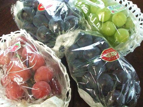 岡山 ぶどうの里の葡萄