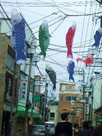 鮪の町の「鯉のぼり」