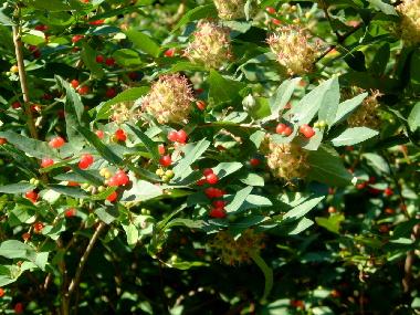 20040626 シェーンブルン宮殿の庭園