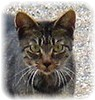 CAT200710B.jpeg