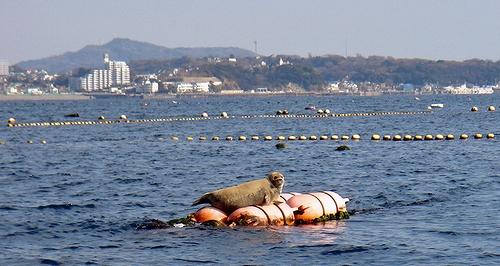 20100221TOP Azarasi.jpg
