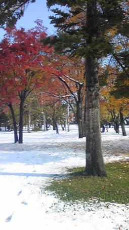 緑と紅葉と雪.jpg