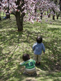 桜×コドモ.jpg