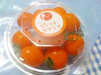 ピッコラカナリアトマト1.png