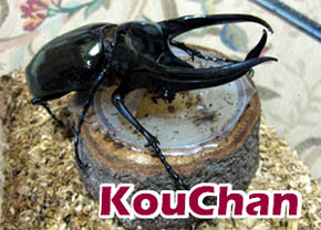 kouchan-1